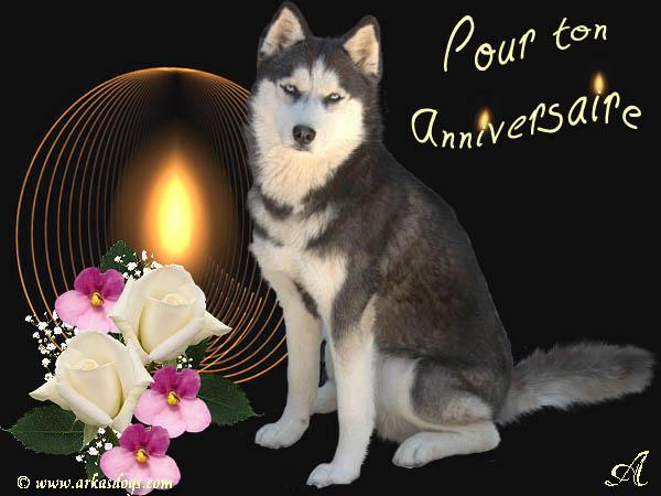 Carte anniversaire avec des loups