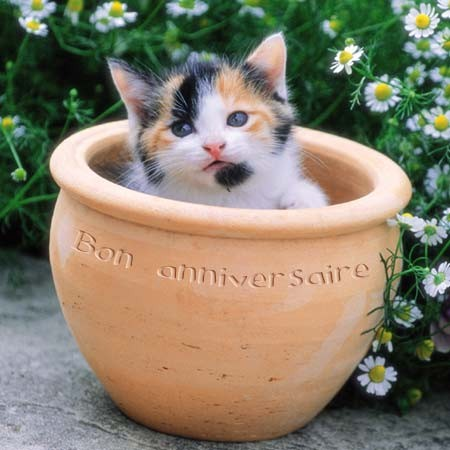 Joyeux anniversaire carte chat