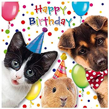 Carte anniversaire chat et chien