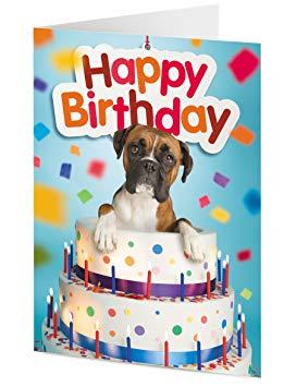 Carte anniversaire avec boxer