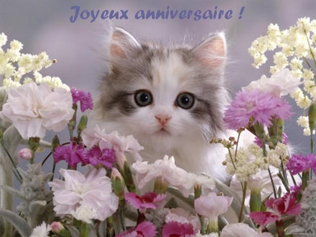 Carte anniversaire petit chat