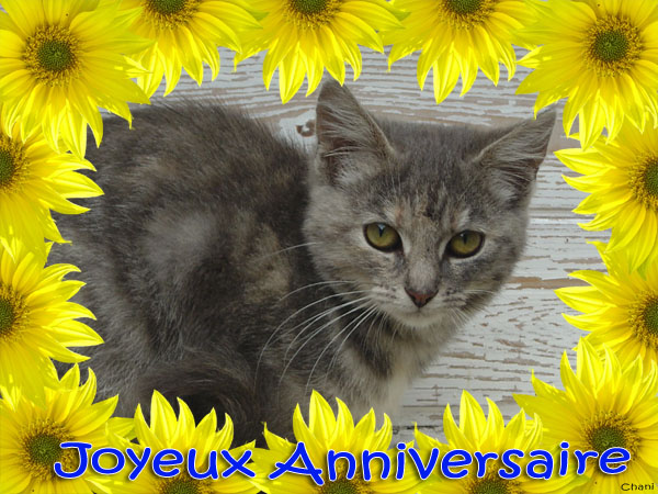 Carte virtuelle anniversaire gratuite chat