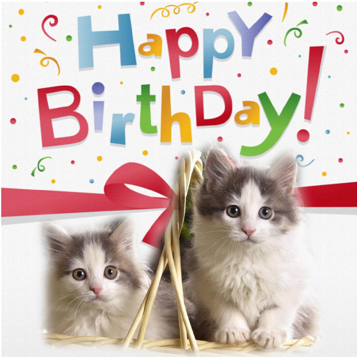 Carte anniversaire chat gratuite