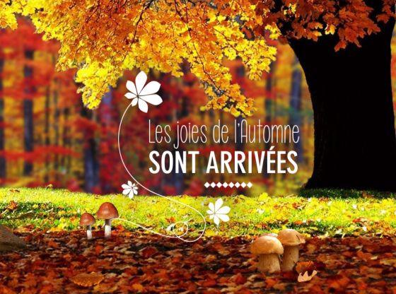 Carte Anniversaire Gratuite Dromadaire Avec Photo Elevagequalitetouraine