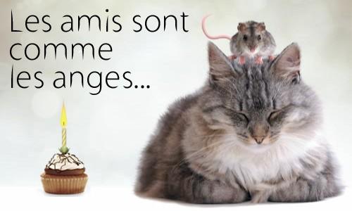 Bon anniversaire carte chat