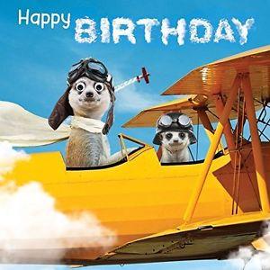 Carte anniversaire suricat