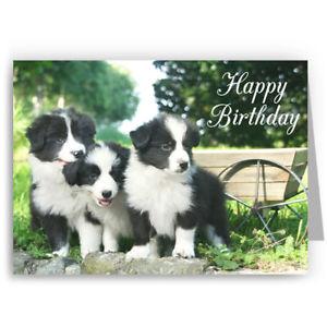 Carte anniversaire border collie